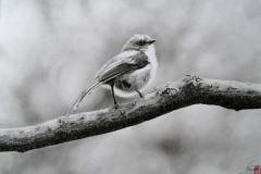 小鳥~エナガ~