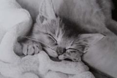 眠るわさびちゃん